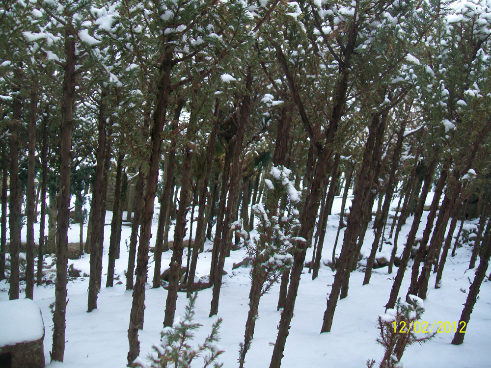 Figura 3. Il Bosco in inverno